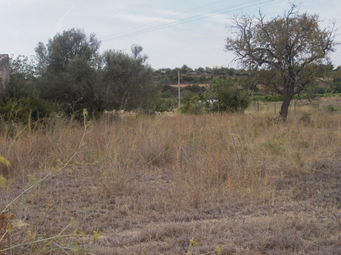 MainProperties :: Terreno para construção de moradia ou armazéns próximo de Estói :: PC177