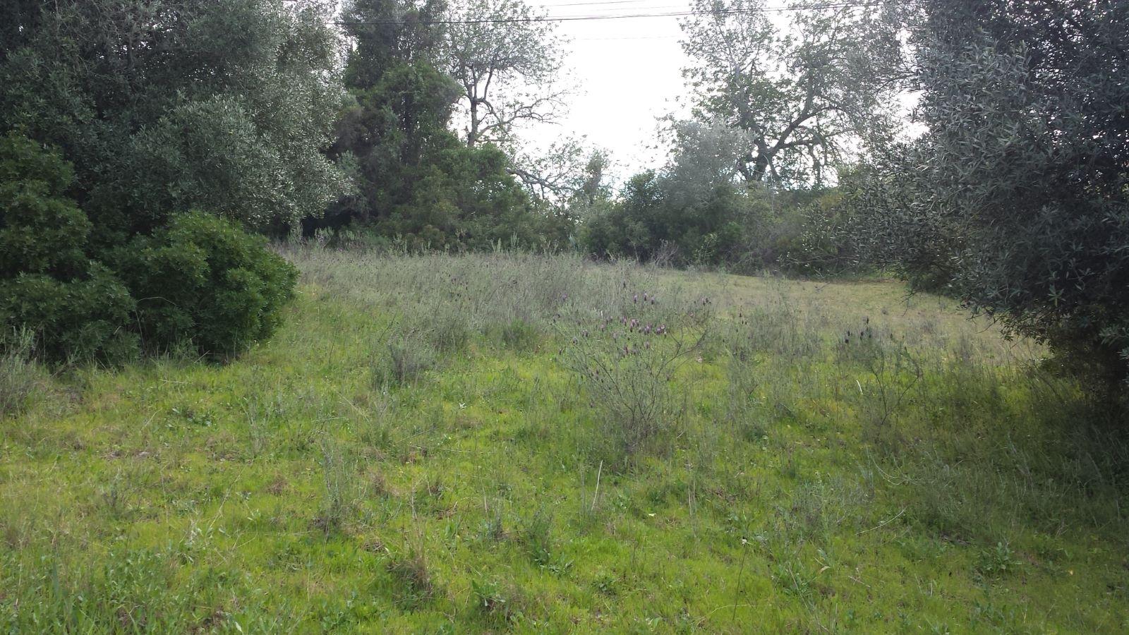 Terreno rústico próximo de Paderne AA030