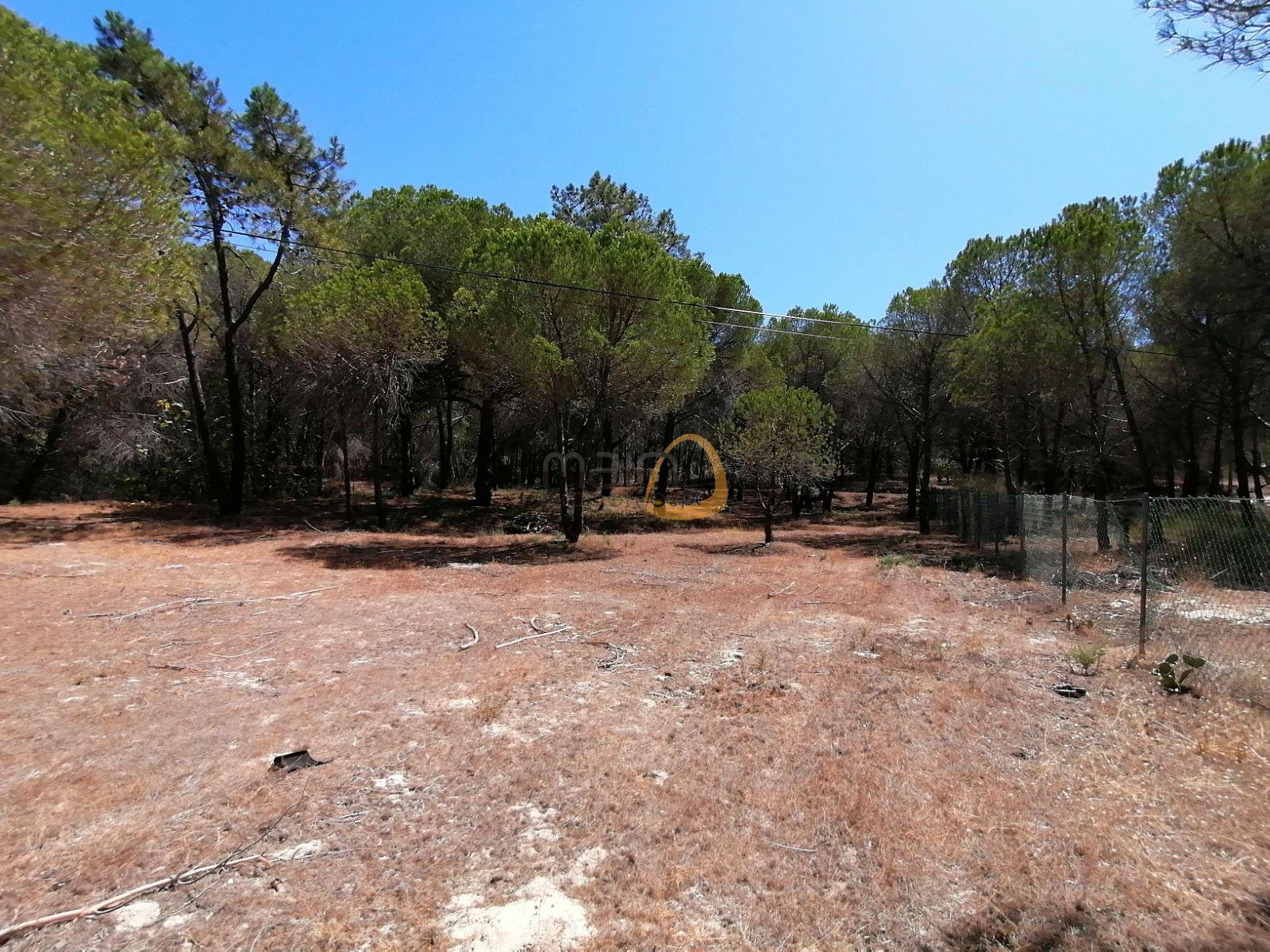 Land in quiet location near Vale do Lobo