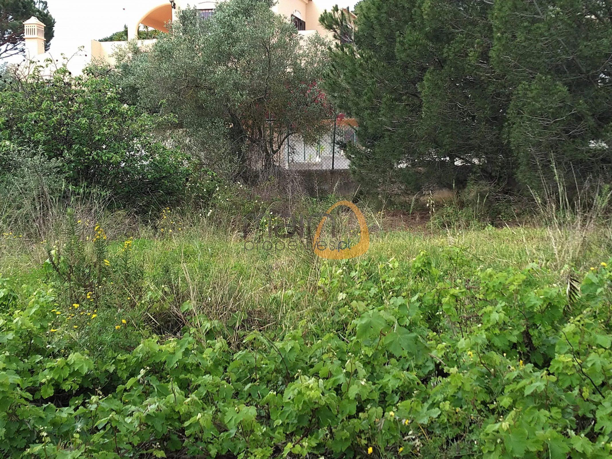[:pt]Terreno para construção de moradia em Montenegro - Faro : Algarve : Portugal : Terreno 15 :: MR039[:en]Land for Villa construction in Montenegro -  Faro : Algarve : Portugal :: Land 15 :: MainProperties :: MR039[:]