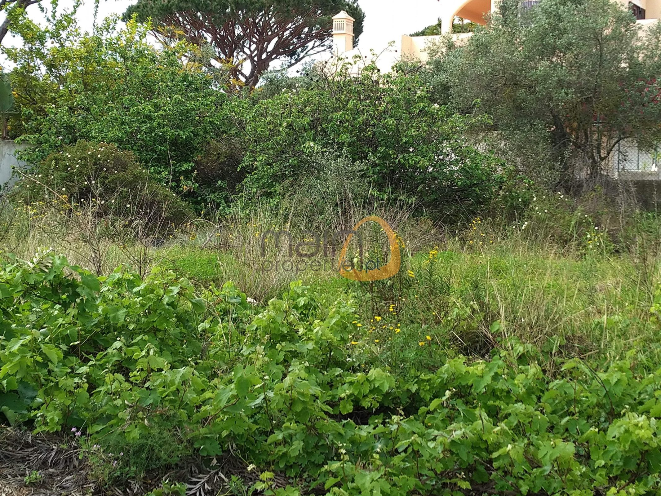 [:pt]Terreno para construção de moradia em Montenegro - Faro : Algarve : Portugal : Terreno 14 :: MR039[:en]Land for Villa construction in Montenegro -  Faro : Algarve : Portugal :: Land 14 :: MainProperties :: MR039[:]