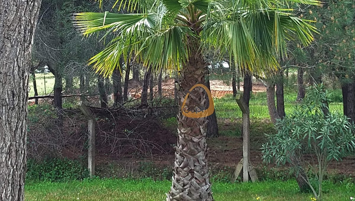 [:pt]Terreno para construção de moradia em Montenegro - Faro : Algarve : Portugal : Terreno 8 :: MR039[:en]Land for Villa construction in Montenegro -  Faro : Algarve : Portugal :: Land 8 :: MainProperties :: MR039[:]
