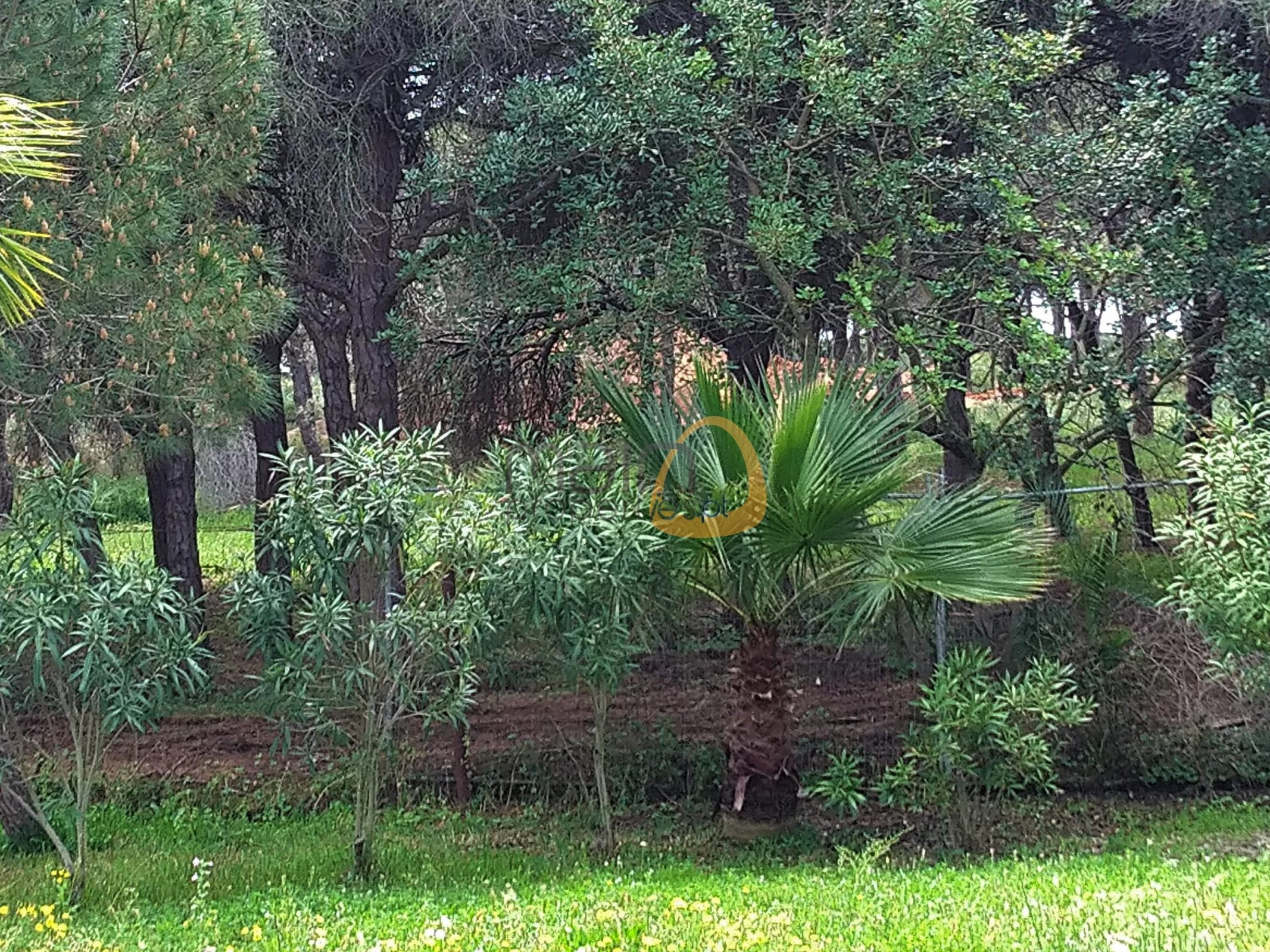 [:pt]Terreno para construção de moradia em Montenegro - Faro : Algarve : Portugal : Terreno 7 :: MR039[:en]Land for Villa construction in Montenegro -  Faro : Algarve : Portugal :: Land 7 :: MainProperties :: MR039[:]
