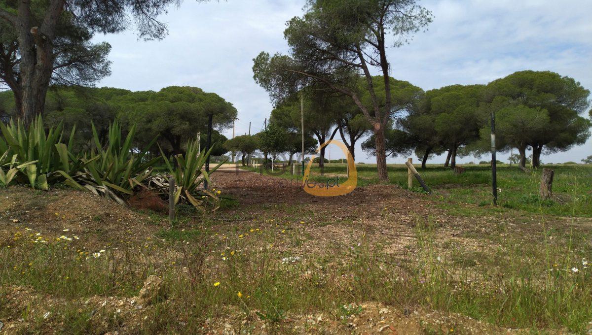 [:pt]Terreno para construção de moradia em Montenegro - Faro : Algarve : Portugal : Terreno 2 :: MR039[:en]Land for Villa construction in Montenegro -  Faro : Algarve : Portugal :: Land 2 :: MainProperties :: MR039[:]