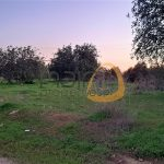 Terreno rústico plano em zona calma perto de Boliqueime :: MR064