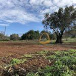 Terreno para construção de duas moradias em Boliqueime :: MP151FT