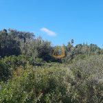 Terreno rústico em zona calma nos arredores de Santa Bárbara de Nexe :: MR075