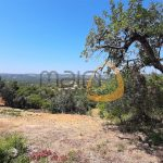 MainProperties :: Conjunto de terrenos rústicos nos arredores de Santa Bárbara de Nexe