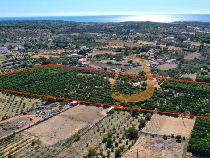 MainProperties :: Lote para construção com pomar no Semino, Quarteira :: MP175FT